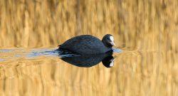 Fågelskådning Östersund