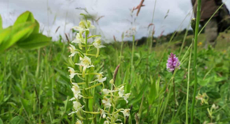 Orkidéepromenad Östersund